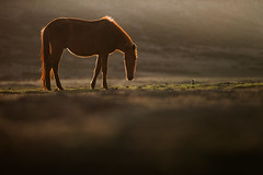 Horse in the sunset - WebValley - Ethiopia (lostin4tune - Thank's for a million views!) Tags: light sunset wild blur male beauty animal backlight canon cheval highlands wildlife web silhouete ethiopia dslr hors 70200mm horseman ethiopie webvalley viesauvage 1dc canon1dc