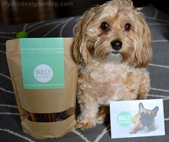 Bully Bundles Brings Quality and Convenience (yourdesignerdog) Tags: dog pets cute dogs blog bed all designer wordpress review service stick chew treat posts product bully reviews bundles subscription ifttt