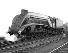 Gresley A4 60024 Kingfisher, Aberdeen Ferryhill shed 61B (rac819) Tags: steam railways britishrailways steamlocomotives uksteam brsteam