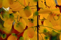 Different ! Why ? (Rajavelu1) Tags: flowers red plant green art yellow outdoor creative artland macrophotograph canon60d