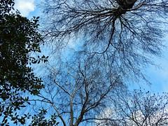 Look up to the skies ... (N0204) (Le Photiste) Tags: blue trees sky tree nature wow artwork blauw skies ngc photographers bleu clay soe fairplay giveme5 autofocus photomix queenbohemianrhapsody ineffable prophoto friendsforever simplythebest finegold artandsoul bloodsweatandgears greatphotographers lovelyshot creativeart digitalcreations artyimpression beautifulcapture skytheme damncoolphotographers myfriendspictures artisticimpressions simplysuperb thebestshot digifotopro afeastformyeyes artforfun simplybecause iqimagequality yourbestoftoday artofimages saariysqualitypictures hairygitselite worldofdetails planetearthnature lookuptotheskiesandsee lovelyflickr vividstriking universalart blinkagain theredgroup kreativepeople photographicworld aphotographersview thepitstopshop thelooklevel1red showcaseimages mastersofcreativephotography creativeimpuls vigilantphotographersunitelevel1 cazadoresdeimágenes rainbowofnaturelevel1red momentsinyourlife livingwithmultiplesclerosisms infinitexposure django'smaster bestpeople'schoice