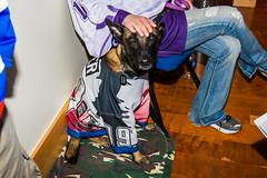 20160409_22092001.jpg (Les_Stockton) Tags: dog pet oklahoma hockey us unitedstates icehockey canine servicedog tulsa jääkiekko hokey haca eishockey hoki hoquei wichitathunder tulsaoilers hokej hokejs bokcenter jégkorong íshokkí ledoritulys hoci xokkey