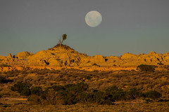 One Tree Hill (robertdownie) Tags: china new sunset moon lake tree wales easter bush desert south hill dry australia cliffs erosion moonrise nsw outback walls scrub lunette mungo eroded