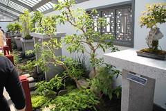 IMG_2449 (Mercar) Tags: canada garden botanical montreal jardin greenhouse botanic botaanikaaed qubeck
