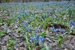 DSC_0044 (Rinswid) Tags: park nature animal spring kharkov feldman ecopark