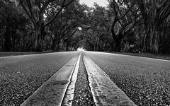 Bridge Road (petojustin) Tags: road trees blackandwhite bw beach zeiss landscape blackwhite florida stuart banyan sel24f18z sonnarte1824 sonya6000