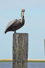 Pelican 2 (JamesPollock3) Tags: ocean river fisherman angle post florida pride pelican barge eatery crabshack layered