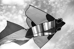 Agfa Agepe FF (Max Miedinger) Tags: sardegna old summer blackandwhite bw film contrast analog vintage stand blackwhite high nikon bn epson sw f3 1970s agfa rodinal expired developed ff biancoenero pellicola v700 agepe