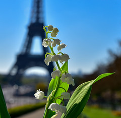 Couldn't resist (julialarrigue) Tags: blue summer sky lily eiffeltower toureiffel