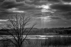 Tree_46223-.jpg (Mully410 * Images) Tags: blackandwhite tree monochrome clouds landscape sunbeams niksilverefexpro