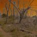 Trombatore Trail to Blue Ridge Meadow (Photoshopped)