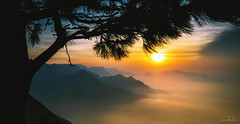 Ripened Fruit (Tom Abraham Dcruz) Tags: mist tree nature beautiful clouds sunrise silhouete layers munnar kolukkumala