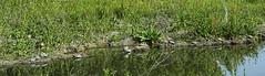 _DSC4260_v1 (rsh_945) Tags: ca nature livermore springtown
