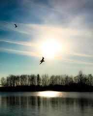 Es ist Frhling. Die Vgel tun`s, die Bienen tun`s, die Schmetterlinge tun`s. Ich mchte es auch tun....aber kann nicht fliegen. (mabumarion) Tags: light sky sun lake reflection nature water clouds flying heaven outdoor gulls silhouettes lakeside windmhlenbruch