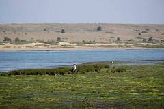 DSC01096 (hofsteej) Tags: lagune bird lagoon morocco maroc oualidia