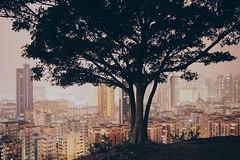 (yinyi0530) Tags: city tree hongkong evening olympus    epl5