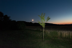 moon with tree (Harry Hennington) Tags: langzeitbelichtung