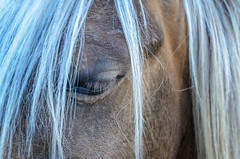 Grey hair, close up (dave.fergy) Tags: people horse abstract eye animals hair pattern mammals bodypart