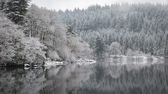 Winter's Resting Place (Images by William Dore) Tags: winter mist snow cold ice water weather fog landscape outdoors scotland nikon frost snowy snowstorm foggy trossachs lochard d810 visitscotland nikond810