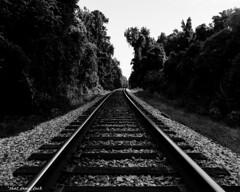 Dark Tracks (that_damn_duck) Tags: bw blackwhite unitedstates traintracks southcarolina
