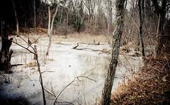 Winter Swampland (lclower19) Tags: pond massachusetts lagoon swamp horn woburn