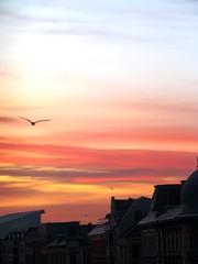 Goodmorning Copenhagen..... (tvedepigen) Tags: city morning pink blue houses winter red sky orange seagulls rooftop nature sunshine weather birds yellow clouds sunrise copenhagen flying seasons roofs views