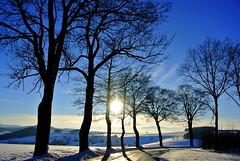Rhön Landscape (ivlys) Tags: schnee trees winter sun snow nature germany landscape deutschland landschaft sonne bäume allemagne rhön mittelgebirge lowmountainrange ivlys