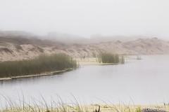 Foggy Matters (buffdawgus) Tags: heron pacificcoast anonuevo californiacoast californa foggyday sanmateocounty leftcoast canonef24105mmf4lisusm sanmateocountycoast canon5dmarkiii lightroom5 topazsw