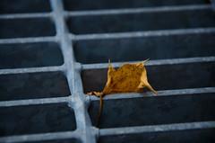 A Grate Leaf 3