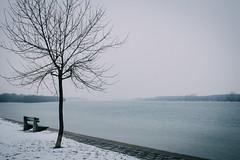 The Endless River (freyavev) Tags: winter white snow tree river bench quay serene belgrade beograd danube donau dunav whitesky dorcol setaliste