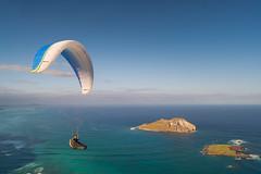 Andrew_Zoechbauer_FirstFlightMPUNewYear_DSC08863-Edit (azoech) Tags: hawaii paragliding makapuu