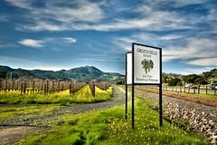 Grgich Hills Yountville Vineyard (DuggieH) Tags: vineyard winery vineyards grapes napavalley napa grape wineries yountville nikondslr nikond7100