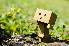 [Danbo] Pick me up, please (lenanu) Tags: danbo danboadventure nikon 35mm outdoor drausen toy spielzeug emotion gefhl sun sunlight sonne spring summer frhling sommer bokeh schrfentiefe tiefenschrfe light licht shadow schatten rock stein grass gras lenanu