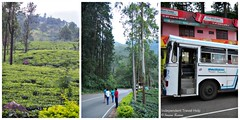 Tea Plantations Kandy to Nuwara Eliya (indtravhelp) Tags: scenery tea greenery srilanka ceylon lush hillcountry teaplantations picmonkey