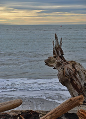 Guardian of the beach (donmarcyp) Tags: ocean beach driftwood lapush