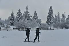 Deux skieurs de fond (Flikkersteph -4,000,000 views ,thank you!) Tags: trees winter snow belgium overcast freeze lighteffect hautesfagnes marshlands beautyofnature coldtemperature graycolors