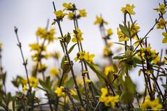 un peut de couleurs (ni.colas) Tags: art fleur fleurs plante photo couleurs paysage extrieur champ