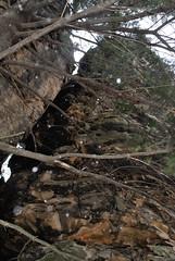 DSC_0047 (Fluff Tater) Tags: wisconsin glacial glaciallake millbluffstatepark raggedrocks 4march2016