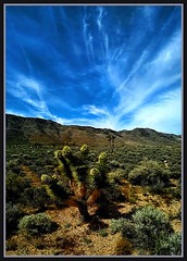 BatFood (Geo_grafics) Tags: cactus flower nature cali desert pano vert mojave bloom sanbernadino vertorama caqlifornia