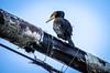 Great Cormorant at Jordan Harbour (tuijapauhu) Tags: ontario canada bird nature wildlife shipwreck stcatharines waterfowl naturephotography greatcormorant phalacrocoraxcarbo jordanharbour lagrandehermine