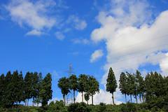 (  / Yorozuna) Tags: sky plant tree tower japan sunny bluesky  niigata  tokamachi    japanesecedar steeltower electricwire       electricline fineweather    transmissionlinetower clearweather