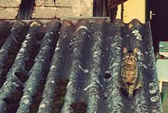 Cat on the roof (Sareni) Tags: roof light brick colors wall vintage germany deutschland spring aprile 2010 twop prolece boje svetlost nemacka krov gschwend catontheroof cigle sareni mackanakrovu