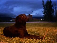Negro (Mariano Montes | HDsuperbikeVideos) Tags: blue dog argentina animal atardecer photography negro perro animales fotografia crdoba mascota mascotas perrito tarde callejero elnegro sierrasdecordoba crdobaargentina siquiman parquesiquiman