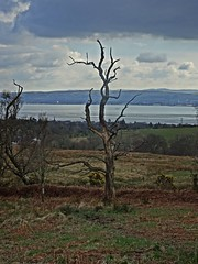 The Tree (Bricheno) Tags: tree river scotland clyde greenock argyll escocia estuary argyle szkocja helensburgh schottland scozia cosse firthofclyde argyllbute  esccia   bricheno scoia
