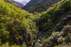 cann do rio Mao, ruta das pasarelas (hilarioperez) Tags: verde nature landscape natureza bosque ourense paisaxes riomao hilarioperez canndomao