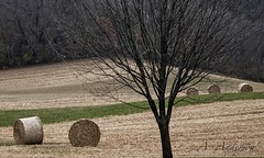 Haying (A Anderson Photography, over 1 million views) Tags: canon hay bales