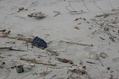 All Photos-9308 (jlh_lunasea) Tags: beach driftwood manzanita