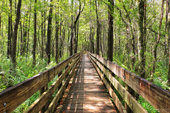 Boardwalk, Six Mile Cypress Slough Preserve - Florida (Andrea Moscato) Tags: park wood trees shadow parco usa brown green nature leaves america forest landscape us leaf day branch view unitedstates natural walk vivid natura ombre luce paesaggio bosco statiuniti naturale andreamoscato