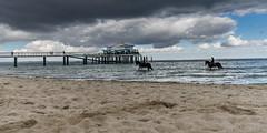 Pier of Timmendorf beach (hjuengst) Tags: bridge horse beach water strand pier sand brcke timmendorf teahouse seebrcke teehaus seeschlschenbrcke restaurantwolkenlos