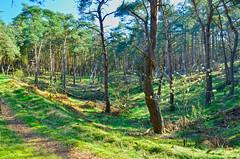Lommel dal in zustersbos (eddy.vanransbeeck) Tags: natuur bos heide lommel